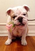 Little princess Fiona offers a Valentine's gift